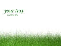 Herbe (0) .jpg Photographie stock libre de droits