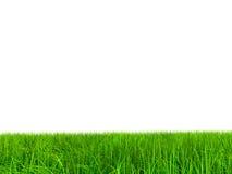 (a) herbe 004 à 9000 sans sky.jpg Images stock