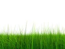 (a) herbe 005 à 9000 sans ciel Images libres de droits