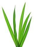herbe Image libre de droits