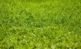 Herbe Photographie stock