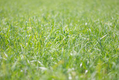 Herbe Photos stock