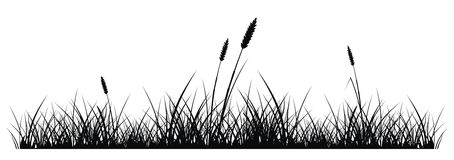 Herbe Image stock