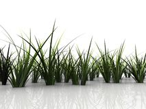 herbe 3d illustration stock
