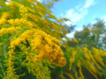 herbe Photo libre de droits