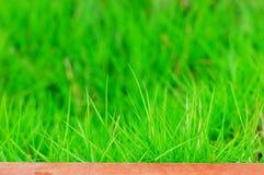 herbe photo stock