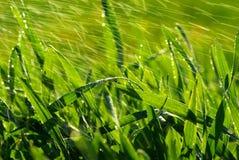 herbe Photos stock