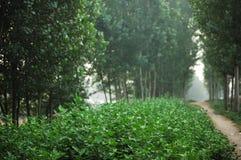 Herbe abondante Photo libre de droits
