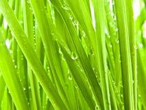 Herbe abondante d'été Photographie stock
