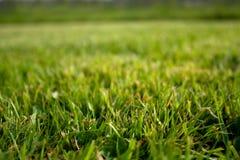 Herbe abondante de pelouse Image libre de droits