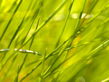 Herbe abstraite Images stock