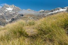 Herbe alpine en parc national du passage d'Arthur Photo stock