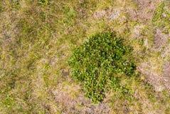 Herbe alpine sur le dessus de la montagne, au parc naturel Bucegi, Photo libre de droits