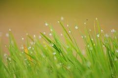 Herbe après pluie Images libres de droits