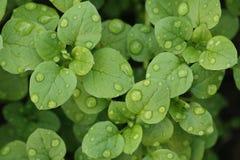 Herbe après pluie Photo stock