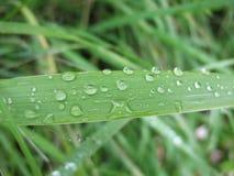 Herbe après une pluie Photos libres de droits