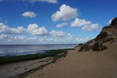 Herbe arénacée de falaise de Morsum Image libre de droits