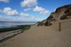 Herbe arénacée de falaise de Morsum Images libres de droits