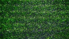 Herbe artificielle Photos stock