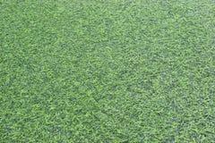 Herbe artificielle Image stock