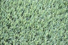 Herbe artificielle d'AstroTurf photographie stock libre de droits