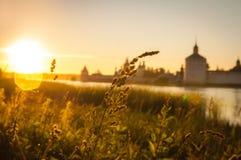 Herbe au coucher du soleil Photo libre de droits