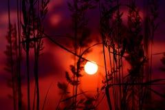 Herbe au coucher du soleil Images libres de droits