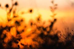 Herbe au coucher du soleil La photo est hors focale images stock