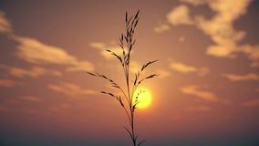 Herbe au coucher du soleil banque de vidéos