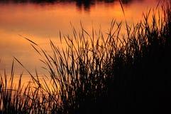 Herbe au-dessus du lac au coucher du soleil Photographie stock libre de droits