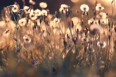 Herbe au pré de coucher du soleil Photos libres de droits