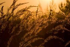 Herbe au soleil Images libres de droits