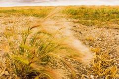Herbe au soleil sur un champ de prairie Photographie stock libre de droits