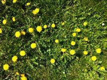 Herbe avec des fleurs photos libres de droits