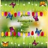 Herbe avec des fleurs Images libres de droits