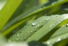 Herbe avec des gouttes de pluie Photos libres de droits