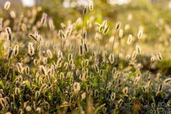 Herbe avec des transitoires dans les rayons du light_ de matin photos stock