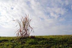 Herbe avec le ciel Image libre de droits