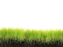 Herbe avec le sol Image libre de droits