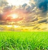Herbe avec le soleil Photographie stock