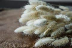 herbe blanche de queue de lapin (lapin), bouquet sec de fleur de lagurus sur l'OE Photographie stock