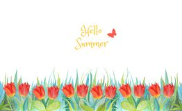 Herbe bleue et verte avec les tulipes lumineuses Centrales d'isolement sur le fond blanc Bonjour ?t? photographie stock
