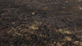 Herbe brûlée sur le fond de la ville Ressort banque de vidéos