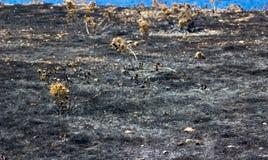 Herbe brûlée Photos libres de droits