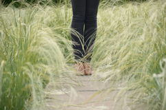 Herbe brouillée de fond sur la route latérale et les jeans de femmes et les chaussures de marche d'espadrille Photo libre de droits