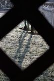 Herbe congelée par la grille Photographie stock