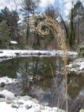 Herbe courbée d'hiver Photo libre de droits