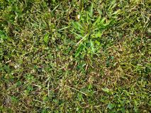herbe courte photographie stock