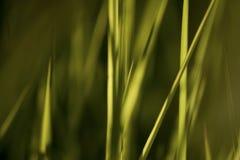 Herbe d'été, fond abstrait Photographie stock libre de droits