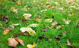 Herbe d'automne image stock